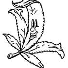 Weedpedia